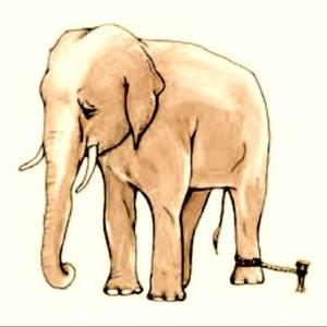 elefant legata
