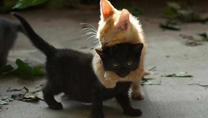 hug 1